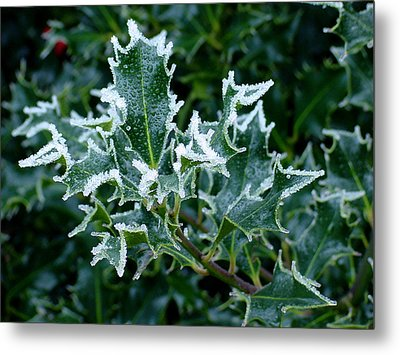 Frosted Holly Metal Print by Shirley Heyn