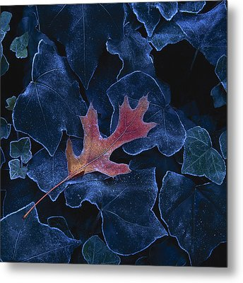 Frosted Leaf And Ivy Metal Print