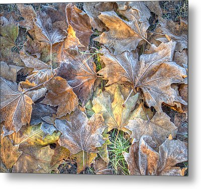 Frosted Leaves 8x10 Metal Print