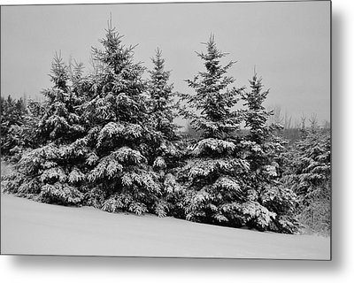 Metal Print featuring the photograph Frosted Trees by Kathleen Sartoris