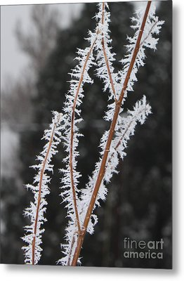 Frosty Branches Metal Print by Carol Groenen