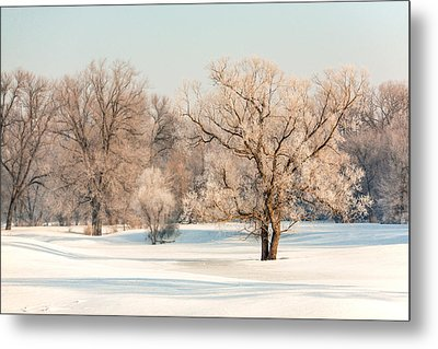Frosty Forest Metal Print by Todd Klassy