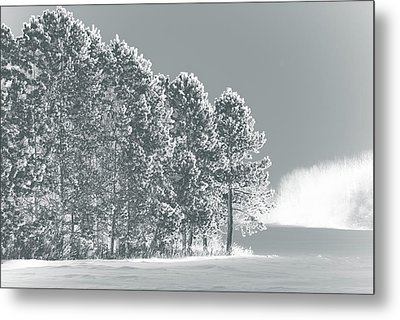 Metal Print featuring the photograph Frosty Morning by WB Johnston