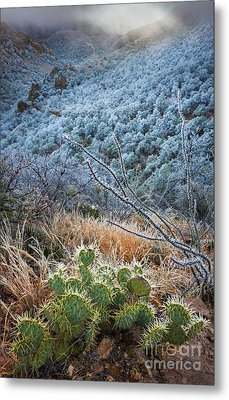 Frosty Prickly Pear Metal Print by Inge Johnsson