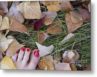 Frosty Toes Metal Print