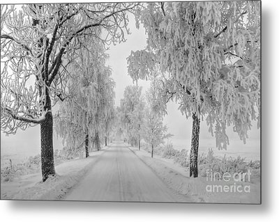 Frosty Winter Morning Metal Print