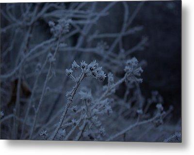 Frozen Buds Metal Print