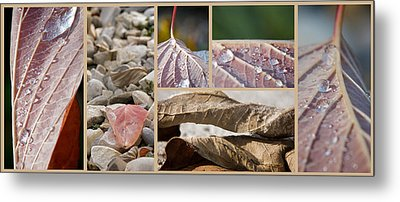 Frozen Dew Metal Print by Lisa Knechtel
