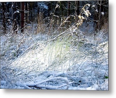 Frozen Grass Metal Print by Svetlana Sewell