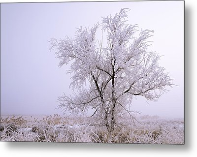 Frozen Ground Metal Print by Chad Dutson