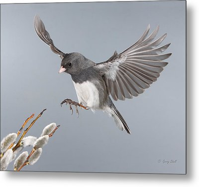 Metal Print featuring the photograph Frozen In Time by Gerry Sibell
