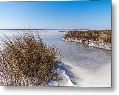 Frozen Marsh Metal Print