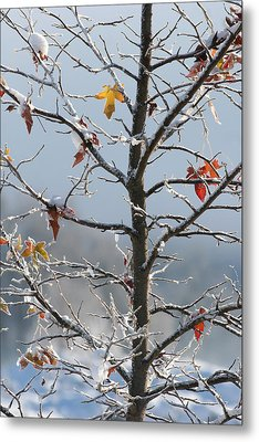 Frozen Remnants Metal Print