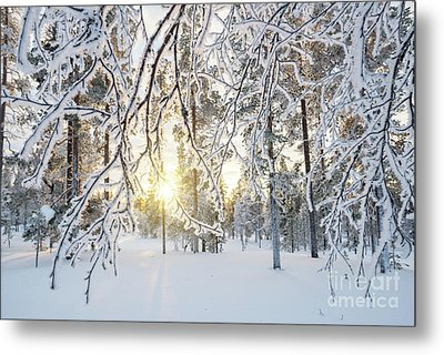 Metal Print featuring the photograph Frozen Trees by Delphimages Photo Creations