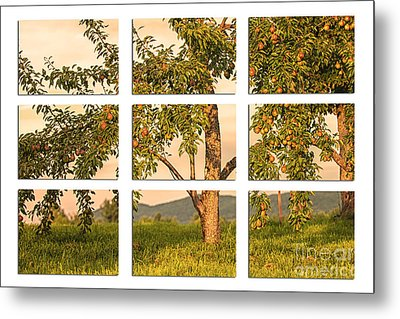 Fruit In The Orchard Through The Window Pane Metal Print by Mary Lou Chmura