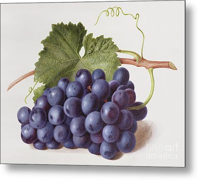 Fruit Of The Vine Metal Print by Augusta Innes Withers