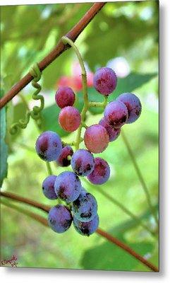 Fruit Of The Vine Metal Print by Kristin Elmquist