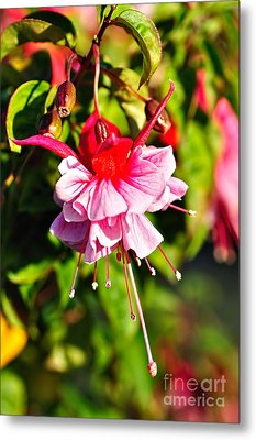 Fuchsia Enjoying The Sunshine Metal Print by Kaye Menner