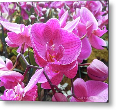 Fuchsia Flower Field Metal Print