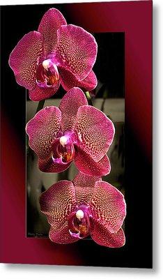 Fuchsia Orchids Oof Metal Print