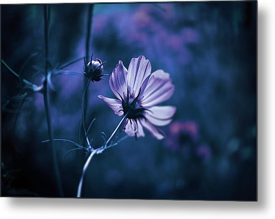 Metal Print featuring the photograph Full Moon Cosmos by Douglas MooreZart