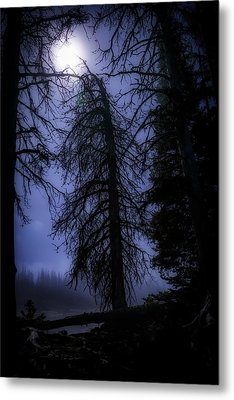 Full Moon In The Woods Metal Print by Cat Connor