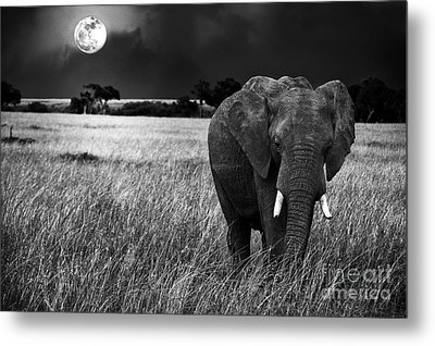 Full Moon Night Metal Print by Charuhas Images