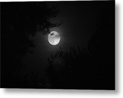 Full Moon With Branches Metal Print