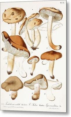 Fungi Metal Print by Jean-Baptiste Barla