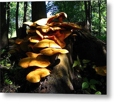 Metal Print featuring the photograph Fungus Colony 23 by Maciek Froncisz