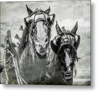 Metal Print featuring the photograph Funny Draft Horses by Mary Hone