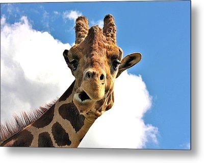 Funny Face Giraffe Metal Print by Sheila Brown