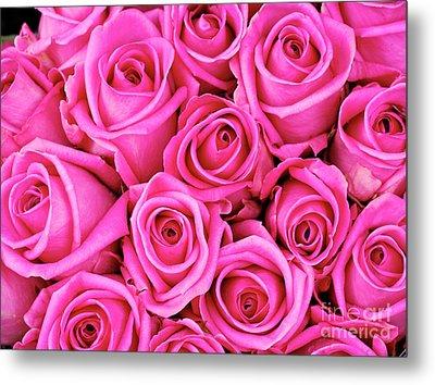 Fuschia Colored Roses Metal Print