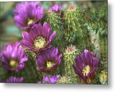 Metal Print featuring the photograph Fuschia Passion  by Saija Lehtonen