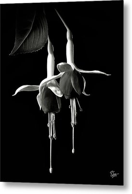 Fuschias In Black And White Metal Print by Endre Balogh