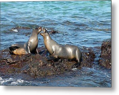 Galapagos Sea Lion Metal Print by Alan Lenk