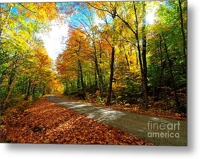 Gale River Road  Metal Print by Catherine Reusch Daley