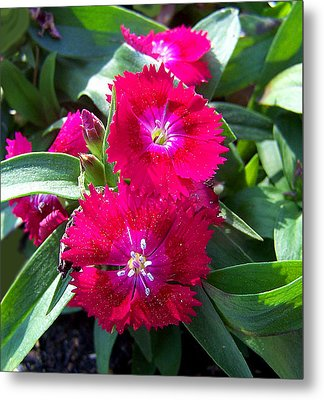 Metal Print featuring the photograph Garden Delight by Sandi OReilly