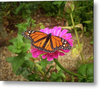 Garden Jewel  Metal Print