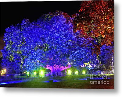 Metal Print featuring the photograph Garden Of Light By Kaye Menner by Kaye Menner