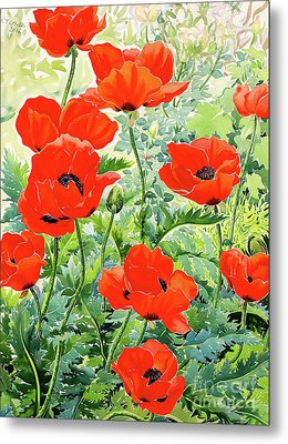 Garden Red Poppies Metal Print by Christopher Ryland