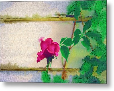 Garden Rose Metal Print by Holly Ethan