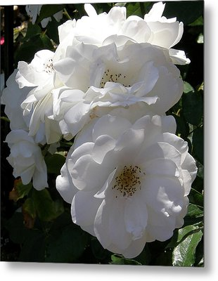 Garden Roses Photo Metal Print by Judy Mercer