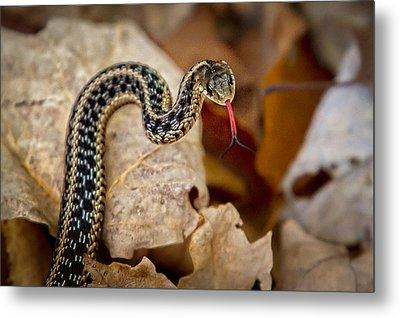 Garden Snake Metal Print by Eleanor Abramson