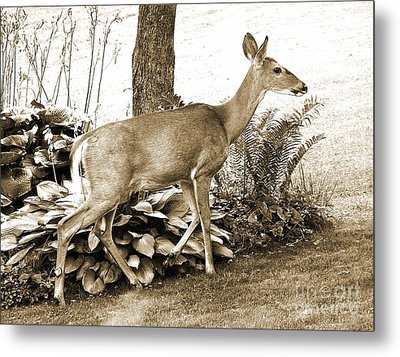 Metal Print featuring the photograph Garden Visitor by Betsy Zimmerli