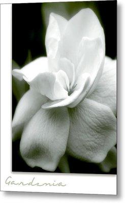 Gardenia Metal Print