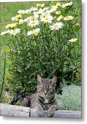 Garfield And Broadway Light Daisies Metal Print