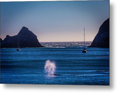 Gary Whale Breaching Metal Print by Garry Gay