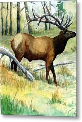 Gash Flats Bull Metal Print by Jimmy Smith