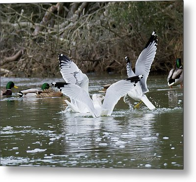 Metal Print featuring the photograph Gathering Of Egrets by George Randy Bass